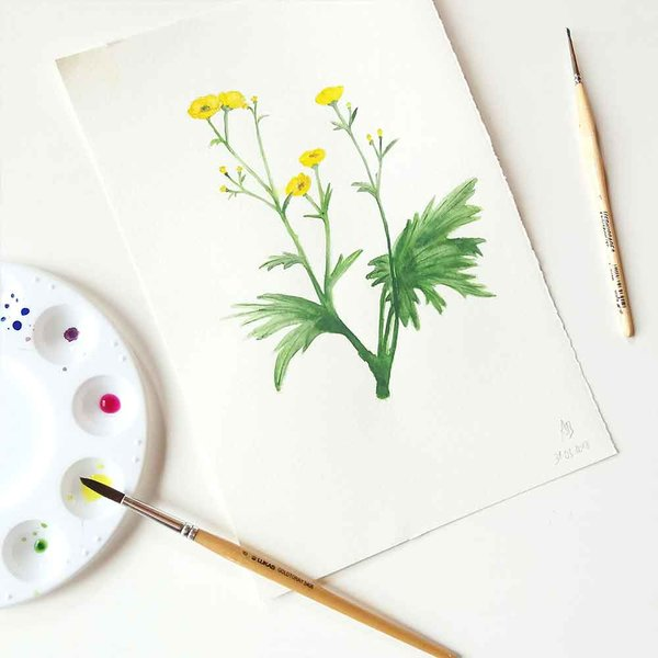 Aquarell Illustration Butterblume von andbuttercups