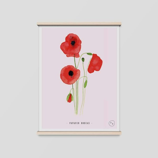 Art Print Mohnblume • DIN A4 • Vintage Illustration