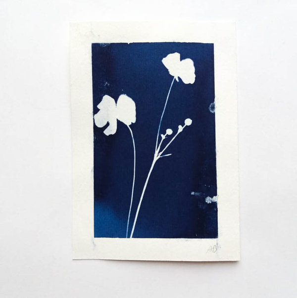 Cyanotypie Butterblume • 9x13 cm • Original Blaudruck